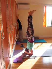 Head Stand is learnt in the Intermediate class at Phillip island Yoga